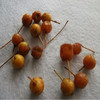 Chinese plant tree seed for filamental flowering crab seed