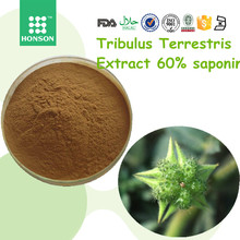 100% pure natural Tribulus terrestris extract 60% saponin by GMP factory