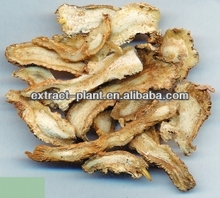 dong quai / chinese angelica extract / angelica powder 1%
