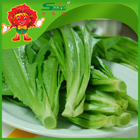 Organic type lettuce supplier, professional lettuce washing machine