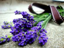 Free Shopping ODM lavender oil where to buy compound oil