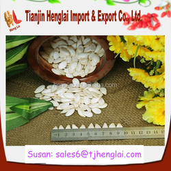 2015 sales new white pumpkin seeds and good quality pumpkin kernels with best prices-1