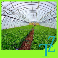 100% virgin LDPE Duratough extra heavy duty 180 micron greenhouse film with great storm / wind resistance