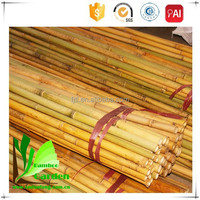 Strong Cheap Bamboo Poles for Window Trellis