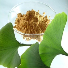 ginkgo and ganoderma extract