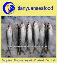 Frozen sardines bait seafood fish