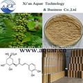 Pérdida de peso de café verde extracto del surtidor de China