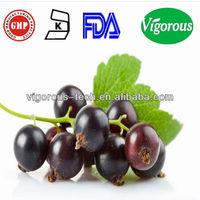 100% Natural Black Currant Extract/Black Currant Extract powder/black currants berry powder