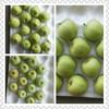 2015 new crop fresh green apple prices