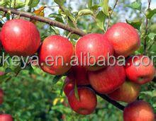 Market price of fresh red fuji apple ,fresh fuji apple for sale