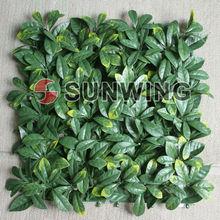 Arbustos ornamentales para aportar intimidad a su jardín