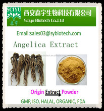 High Quality Angelica Extract Powder