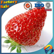 iqf high quality haccp chinese fresh hot sale quick frozen fruits frozen strawberries