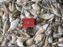 Sea frozen flatfish B.Q.F