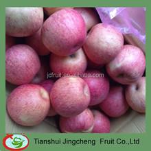 Paper cap bagged Qinguan apple fruit market