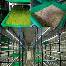 green maize fodder making machine for pig