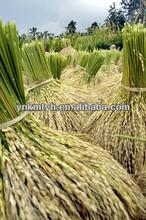 vietnam long grain white rice production
