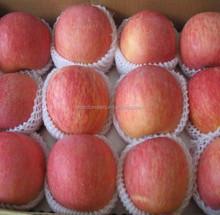 apple fruit sweet apple fuji red apple