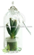 Para bebés de la planta. Mini planta. Jardín de bolsillo