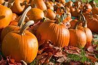 2013 new crop Chinese fresh pumpkin