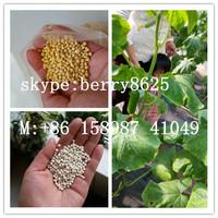 bulk wholesale Granular compound NPK fertilizer prices