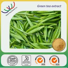 free sample green tea extract,HACCP Kosher FDA green tea extract,70% EGCG 98% polyphenol 85% catechin green tea extract