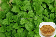 Best quality export nettle extract silicone