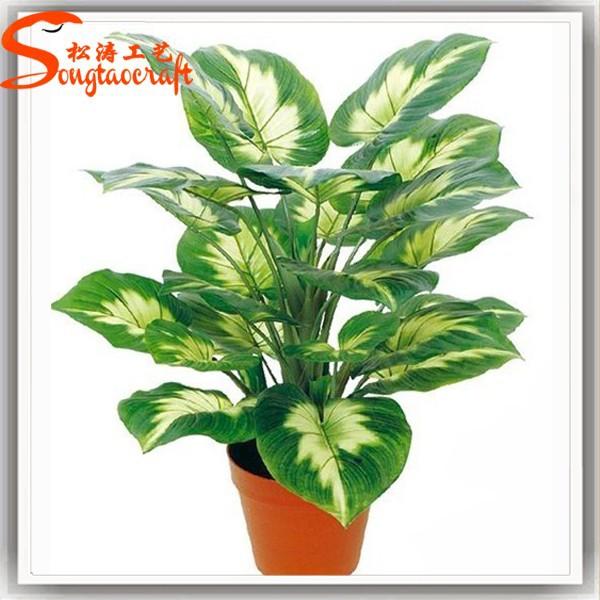 Vuelos baratos de china precio tipo de hoja perenne for Todas las plantas ornamentales