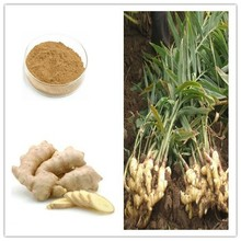 Light Yellow Brown fine powder /Ginger Root Extact Gingerol
