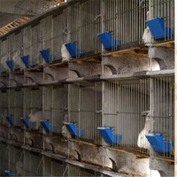 bird cage,rabbit cage direct manufacture