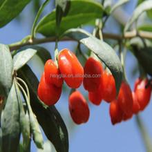 High Quality (SO2 Free) Goji Berries, EU Certified Organic Company!