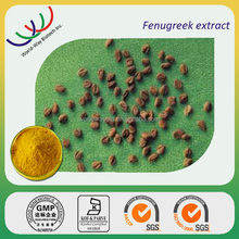 free sample pure natural HACCP KOSHER FDA plant extract fenugreek 4- hydroxy isoleucine