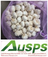 """high quality agriculture wholesale china natural garlic """