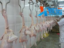 commercial fowl unhairing machine,chicken slaughtering machine,duck plucking machine