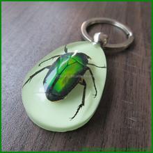 Resin Real Bug Specimen Key Ring Promotioanl Lucite promotional items