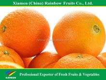 Jiangxi fresh sweet honey navel orange mandarin for fresh fruit importers