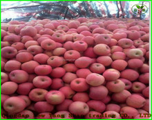 (HOT) Fresh FUJI Apples/Apple exporters cheaper