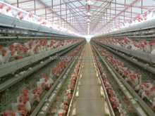 Chicken cage / animal cage -Layers /large animal cage