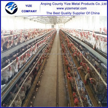 trap nests for layer chickens/chicken egg hatching machine/zimbabwe farm poultry equipment for layers