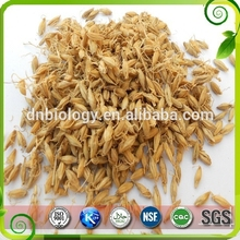 Best function lose weight Barley Malt Extract Barley Malt Extract powder 98%Hordenine