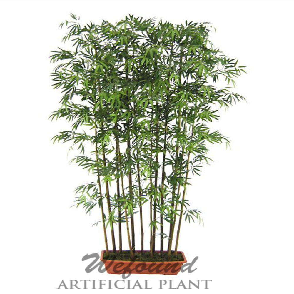 Mini Bamboo Plant : Wf japanese bamboo with black stem potted plant