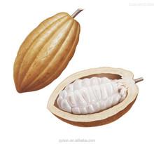 Cocoa Bean Extract Theobromine Powder