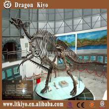 Outdoor and museum replica model dinosaur skeleton