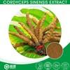 Immune Enhancer Chinese Caterpillar Fungus,Ophiocordyceps Sinensis Extract,Winterworm Summerherb Extract