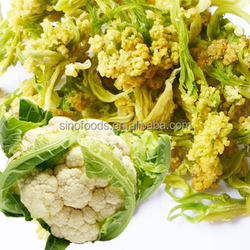 dehydrated vegetable Air dried spicy vegetables best quality dehydrated vegetable