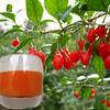 2015 new fresh goji berry juice fruit juice