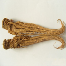 dry angelica root model angelica