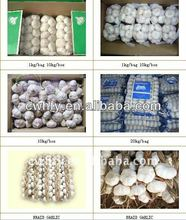 Chinese fresh garlic for sale in shandong