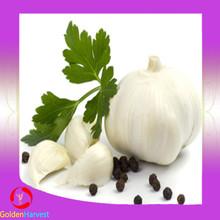 2015 New and Fresh Natural Garlic From China