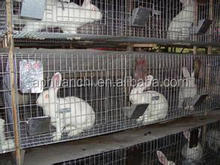 cheap rabbit cages/welded rabbit cage/indoor rabbit cages